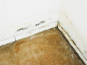 Water Damage Restoration, damaged carpet insurance work emergency wet carpet